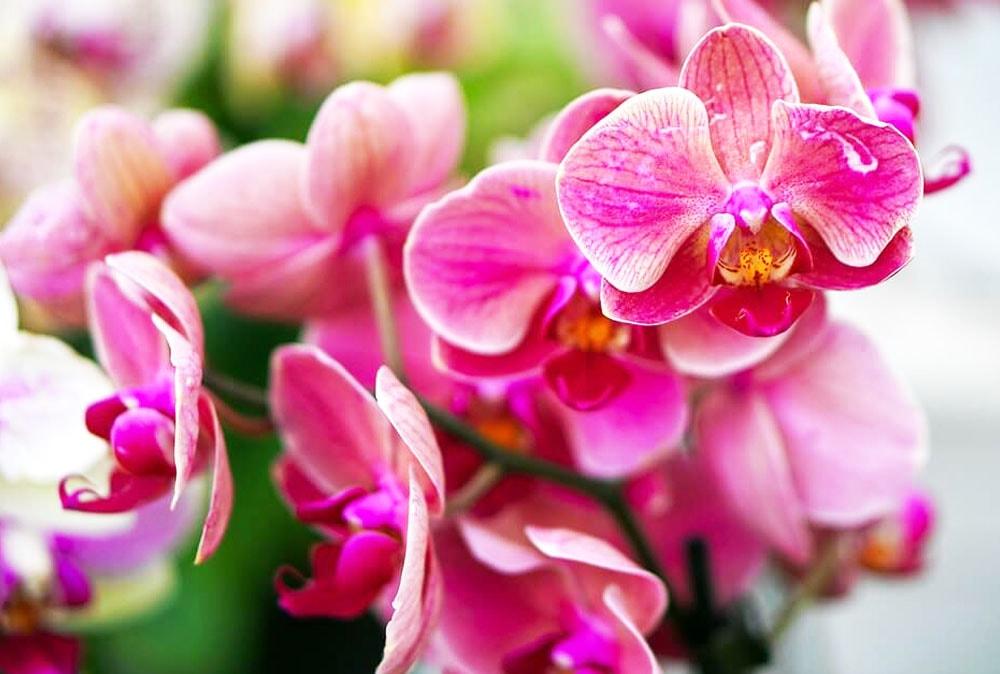 Maravillosas Orquídeas